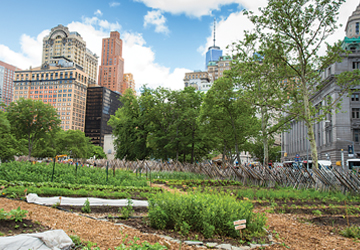 Photo: Battery Urban Farm