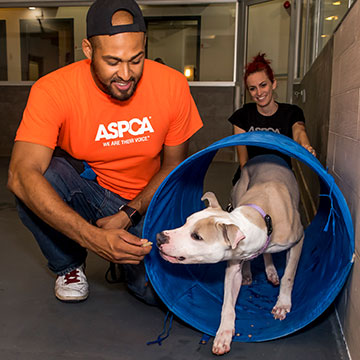 Subaru Share the Love partner ASPCA.