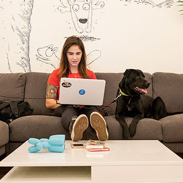 Every day is bring-your-dog-to-work day at Bark & Co.