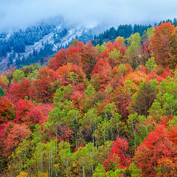 Fall beauty at Logan Canyon in Utah.